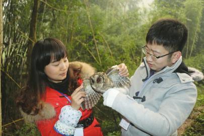 林业站工作人员放飞猫头鹰
