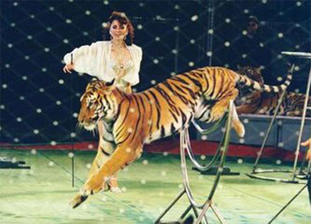 图:《中国野生动物驯化表演行业通则(试行)》在