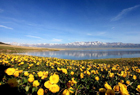 新疆賽里木湖春色如畫