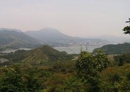 杨梅可散瘀止血止痛 游香港南涌客家村望梅止渴