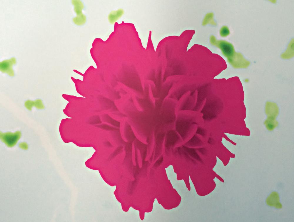 科技小手工制作花朵方法大全