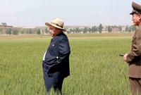 【第31期】朝鲜,百年不遇的旱灾!