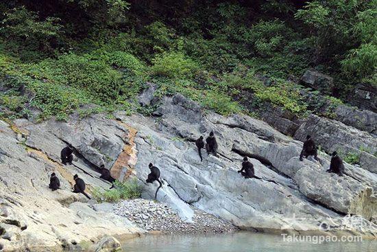 沿河县属中亚热带季风湿润气候区,年均气温16.7°C,森林面积102.