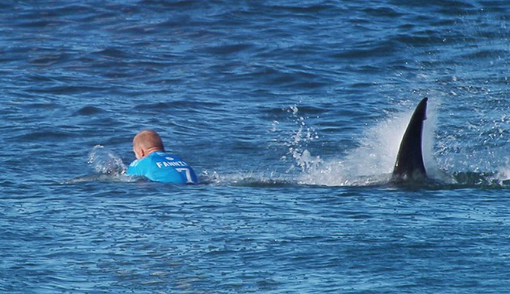 芬宁很快便发现鲨鱼出现