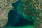 """绿色诱惑:北美五大湖藻类""""狂舞"""""""
