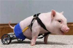感动!科技和爱心让动物运动起来