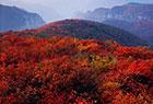 青天河红叶甲天下