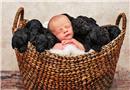 主妇和爱宠同天生产 新生儿与狗宝宝的有爱瞬间