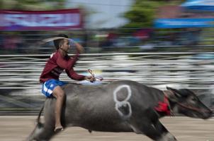 泰國上演傳統水牛賽跑 選手騎牛狂奔