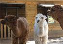 北京某幼兒園建動物園 養殖50多種動物
