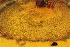 陕西4000年古银杏落叶似黄金毯