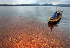 西湖落叶铺满湖面美到窒息