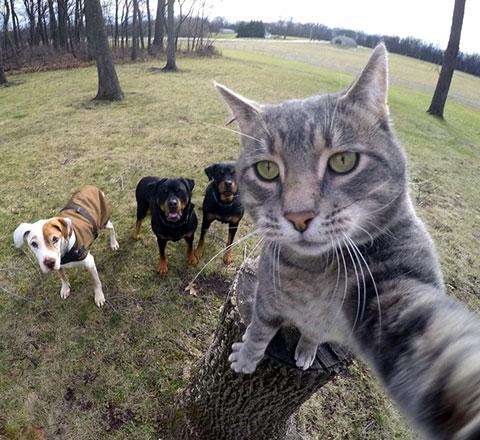 比你還會自拍 這隻貓紅透了Instagram