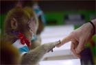 """猴子培訓學校""""開課"""""""