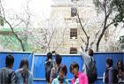 武漢大學主要賞櫻區域被封