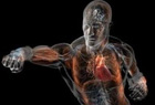 醫學3D人體解剖圖 讓你更加了解自己