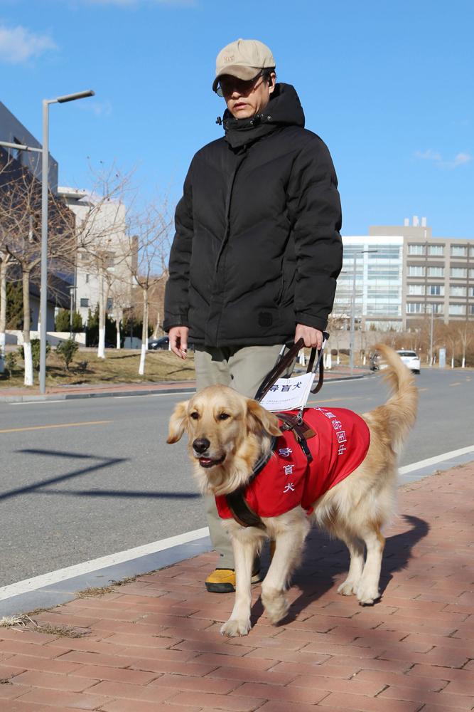 雪纳瑞犬价格 雪纳瑞犬图片_导盲犬图片_杜高犬母犬图片