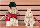 制服兔子造型多變似型男 眾人熱捧成網紅