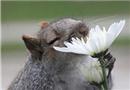 快乐的嗅花控!动物嗅花捕捉甜美气息