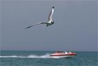 数万夏候鸟蹁跹 青海湖迎观鸟季