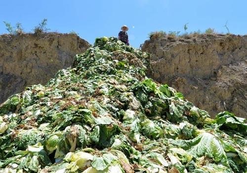 兰州:高原夏菜滞销遭大面积倾倒
