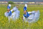 新疆托克逊县油菜花盛开吸引游客