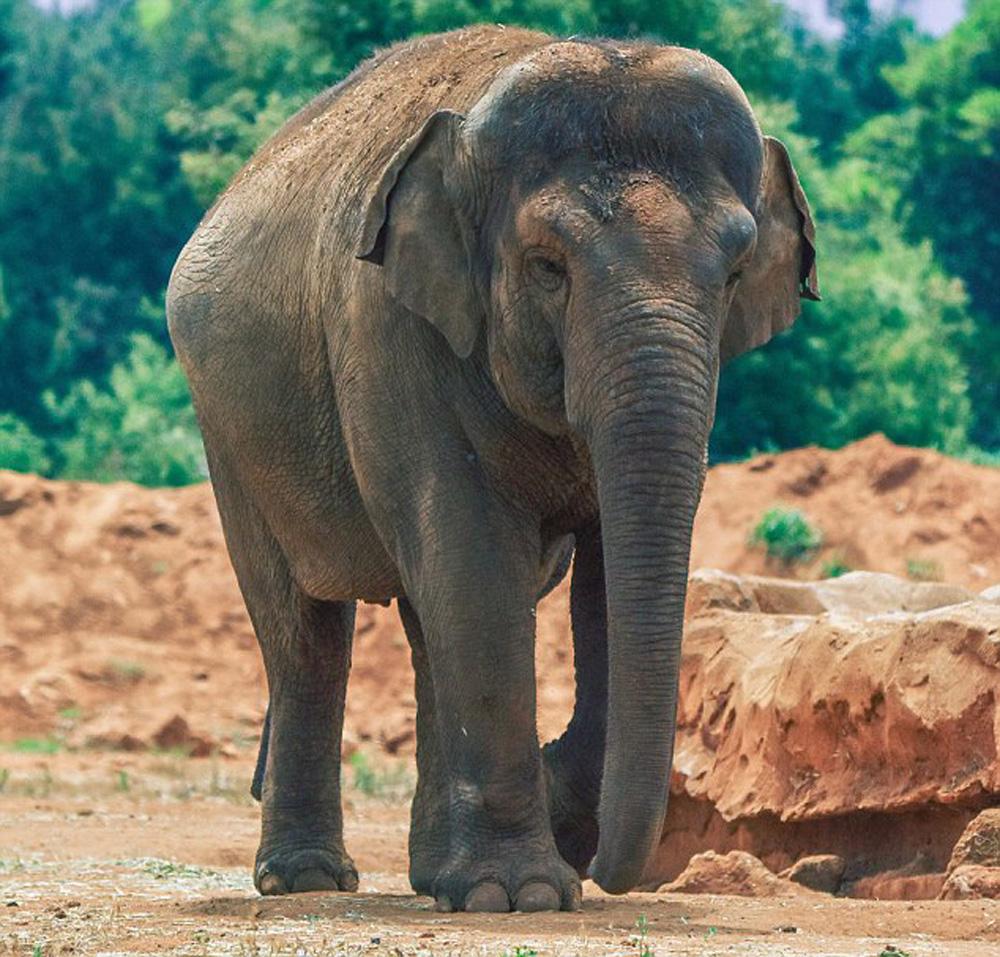 拉巴特动物园里的大象园用栅栏和水沟与游人隔开,但动物园的一位