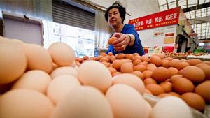 中秋将至 山东鸡蛋价格连续2周上涨