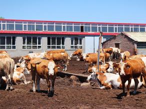 一頭牛的美食宣言