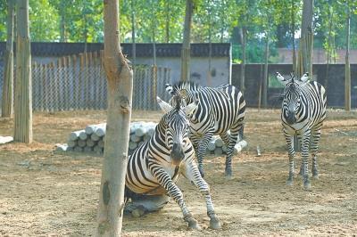豫北地区最大的野生动物园——东北庄野生动物园