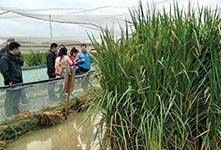 中科院推出高产水稻新种质