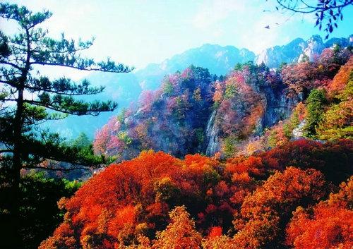洛阳河科大枫叶风景