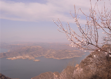 荊紫仙山,在那桃花盛開的地方
