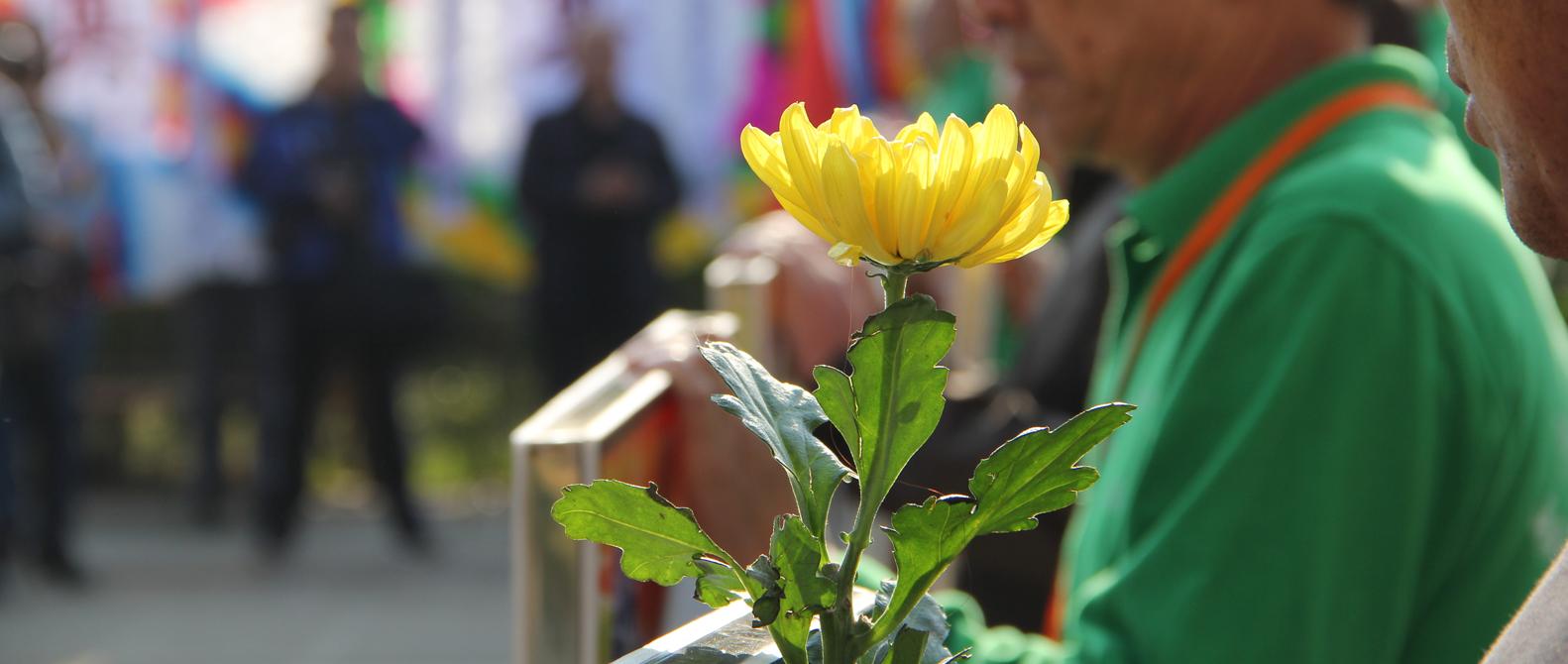 昆明:萬朵菊花獻英烈