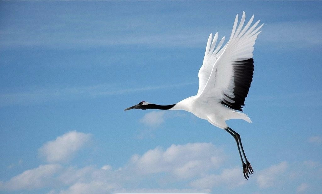 鄭州市動物園新引進6只白鶴,長頸鹿、赤猴喜添新丁