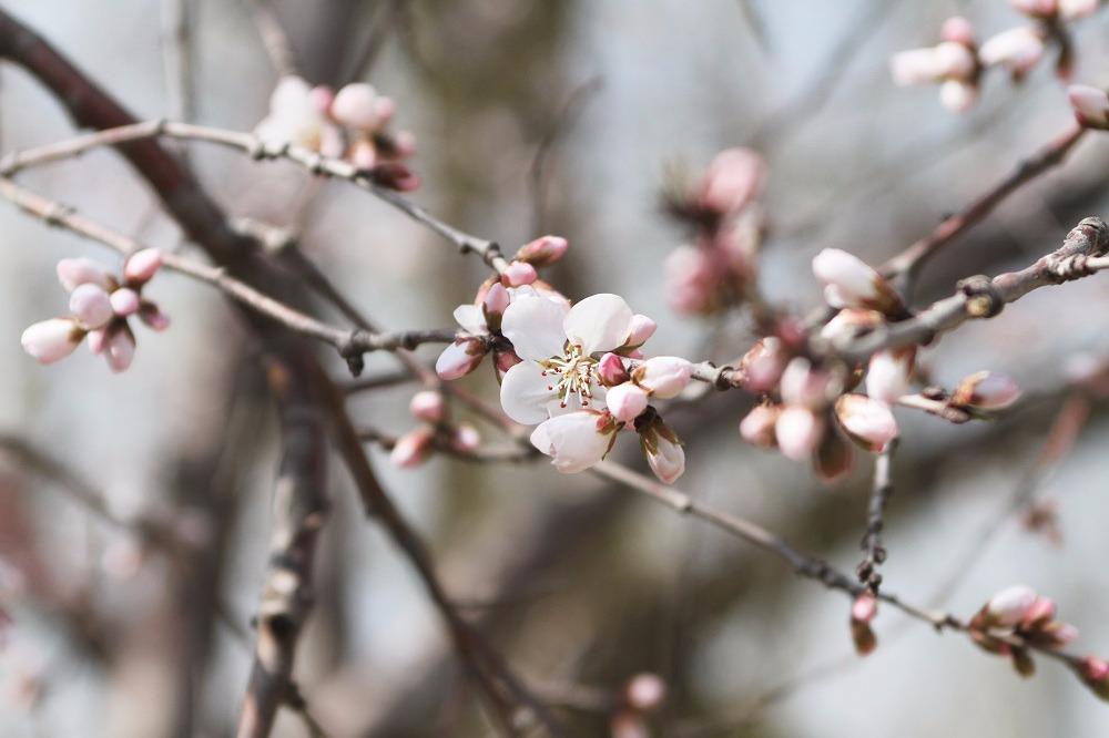 长春最全赏花攻略