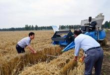 我国杂交小麦研发进入产业化阶段