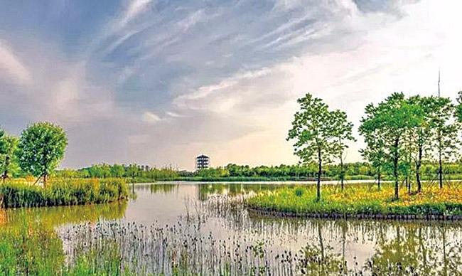 亲近自然、休闲娱乐,临颍黄龙湿地保护区风景