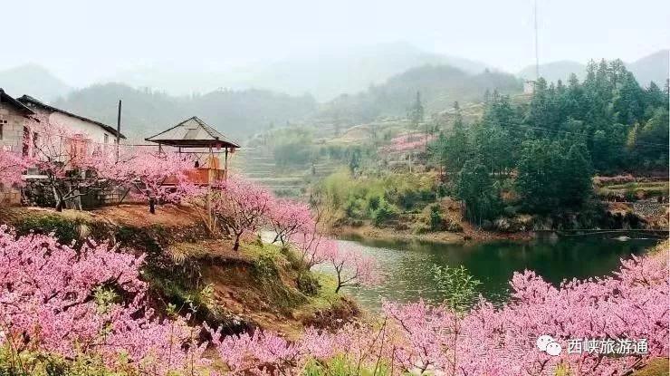 西峽花海果香園:四季都有新顏色