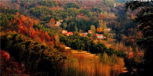 西九华山旅游风景区森林覆盖率达95%以上,并有多处原始森林;夏季绵密