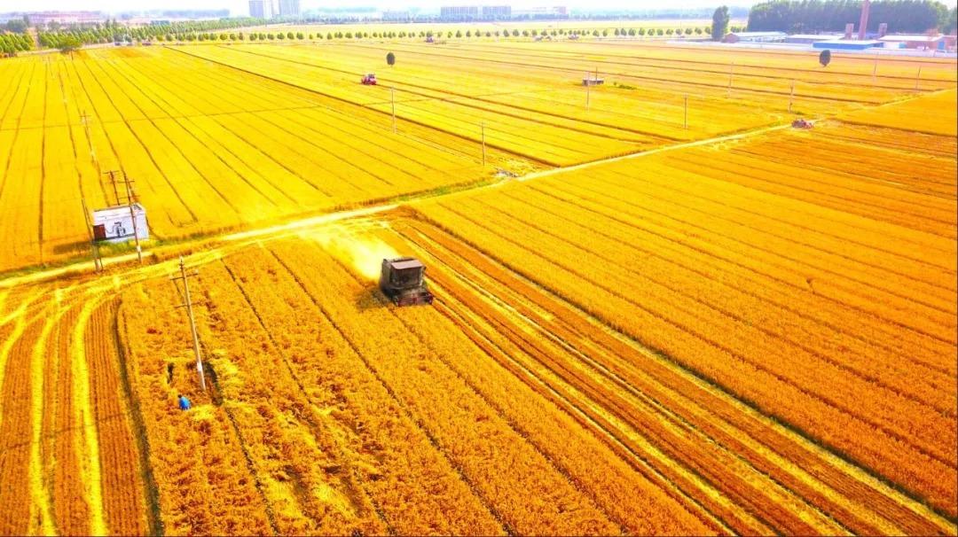鹤壁农业现代化建设蹄疾步稳